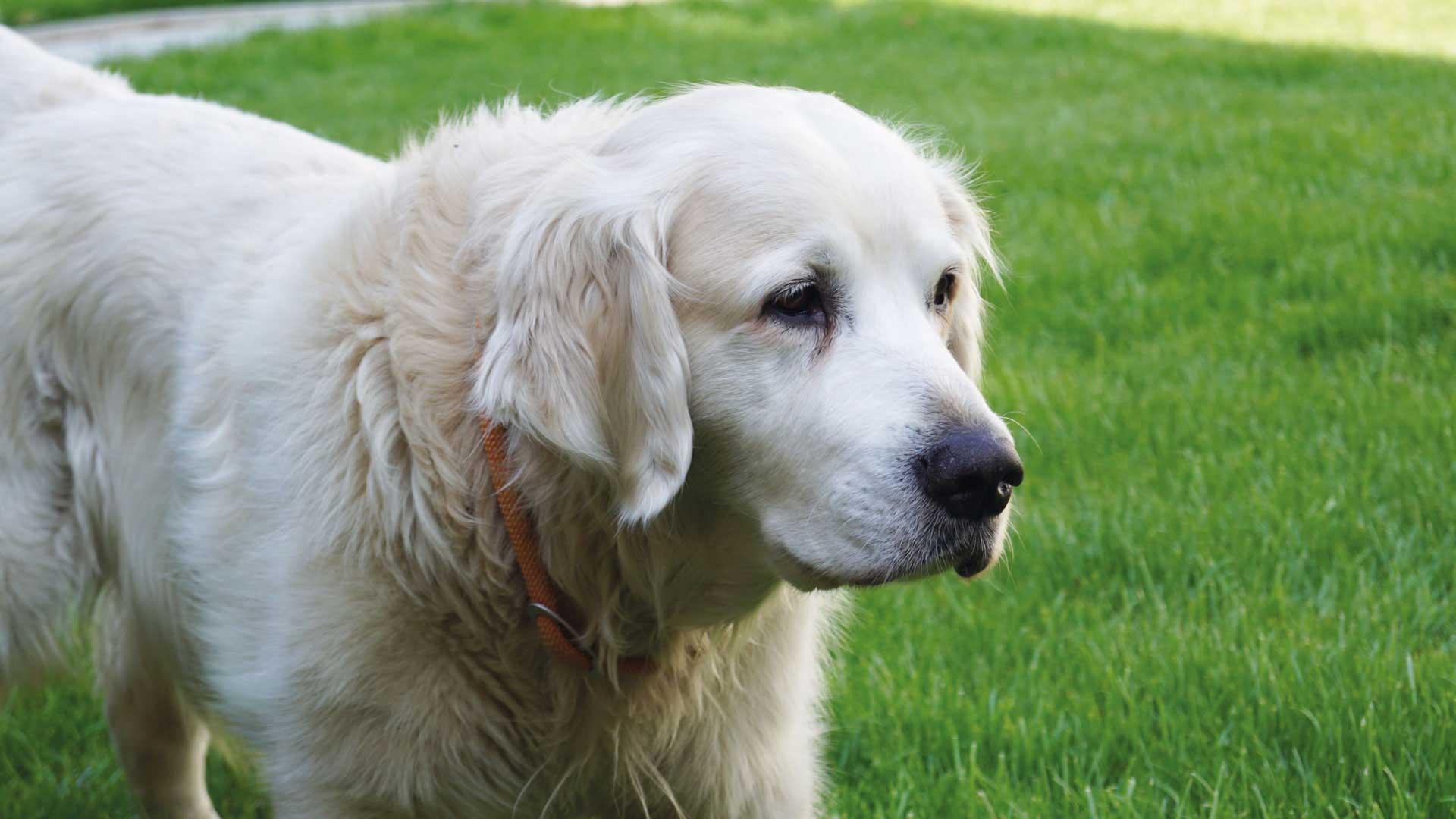 Seniorenzentrum-Bruder-Konrad-Stift-Hund-1