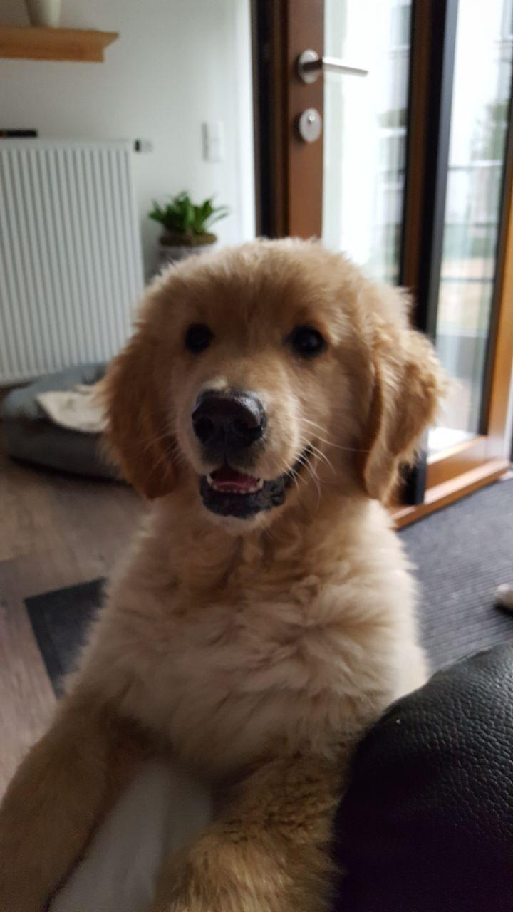 Seniorenzentrum-Bruder-Konrad-Stift-Hund-Henry